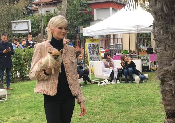 Pet fashion varesina alla Varese design week