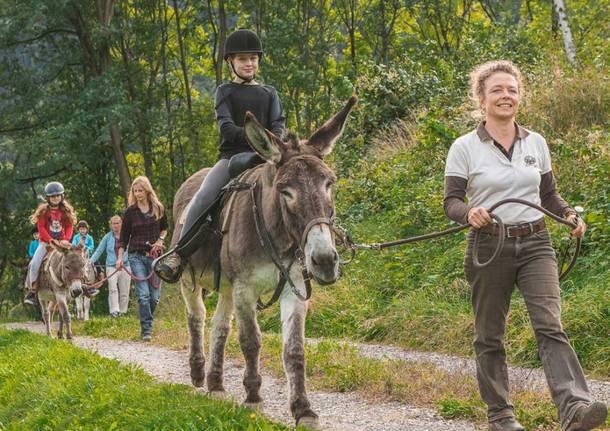 trekking con gli animali in valle di blenio