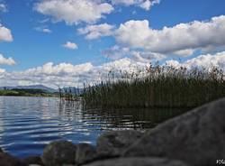 Sul lago di Comabbio