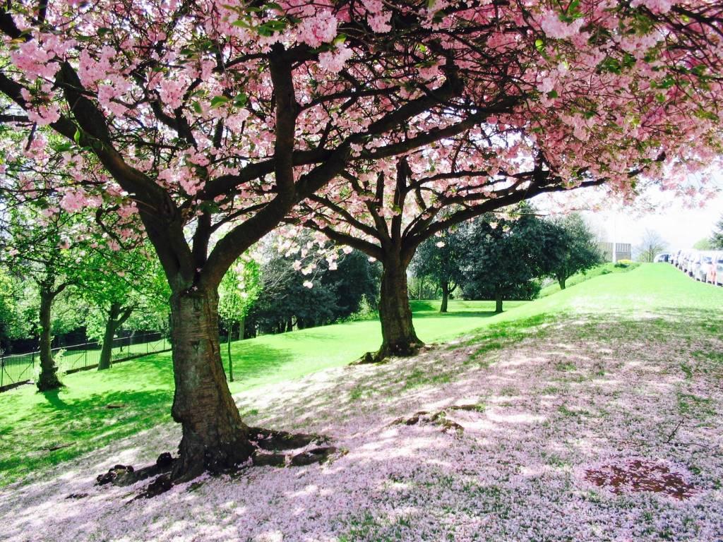 """Concorso """"La tua Primavera"""", tutte le foto - 13"""