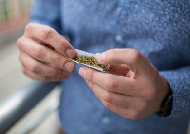 cannabis canna droga spinello
