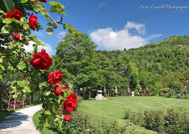 Induno Olona, roseto Asfarm - Foto di Luca Leone
