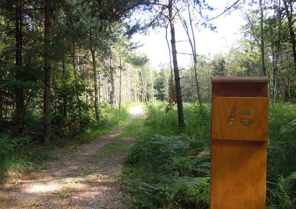 Parco Pineta