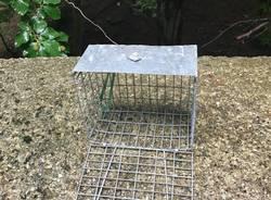 Trappole per uccellini?