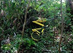 una ofo nel bosco