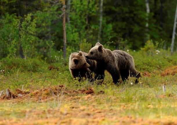 orso web incontri