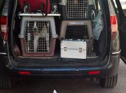 7 cani rinchiusi in una macchina senza acqua da Palermo per la Settimana Milanese del Cane a Rho Fiera