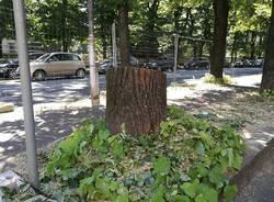 taglio piante viale duca d'aosta busto arsizio