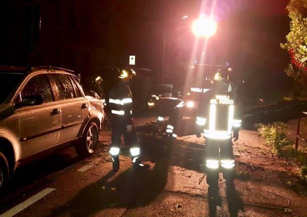 Maltempo, alberto cade su un'auto in via Frattini