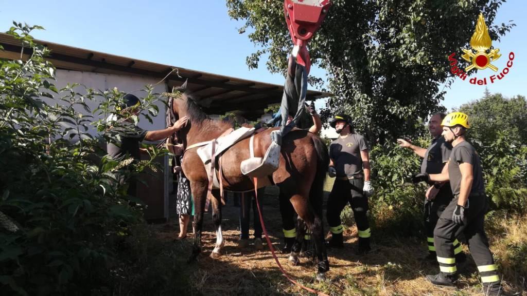 cavallo salvato vigili del fuoco