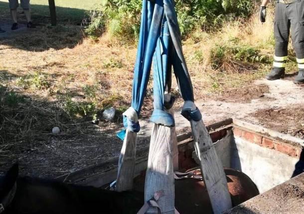 Cavallo cade in un fosso, lo salvano i pompieri
