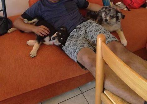 Cani scappati