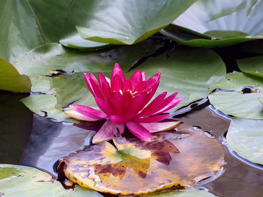 Flora lacustre