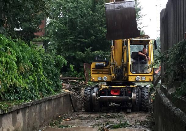 Vedano Olona: alberi caduti per il maltempo