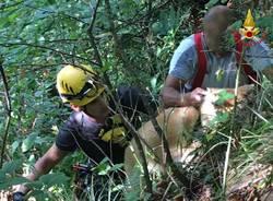 cane cadegliano viconago soccorso