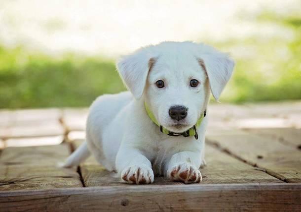 cane cucciolo generica