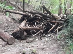 Si continua a lavorare nei boschi sopra Luvinate