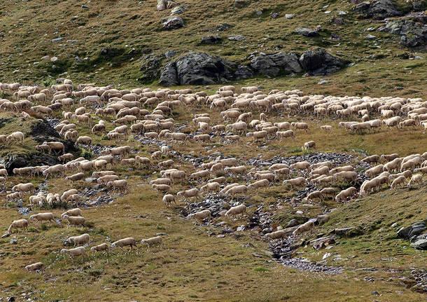 Pastorizia al Gavia
