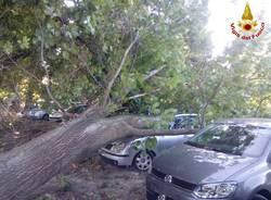 Forte vento, i danni in provincia