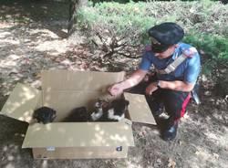 cuccioli carabinieri gerenzano