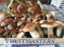 Funghi (Silvano Belotti)