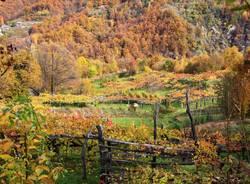 La Vigezzina in autunno e il