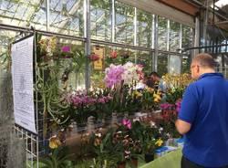 Varese Orchidea 2018