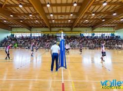 volley stars