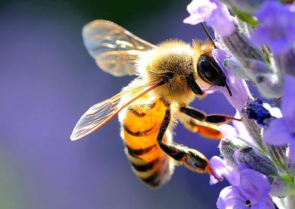 api venaria reale
