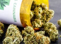 cannabis terapeutica