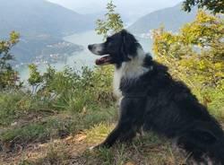 Trekking Dog Day con Istruttore tra le Trincee della Linea Cadorna
