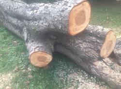 La bomba nell\'albero