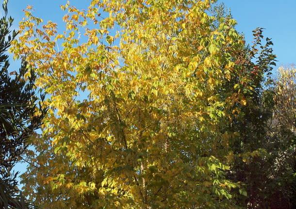 L\'autunno si presenta