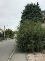 Cura del bello a Busto Arsizio - Beata Giuliana - Via Depretis