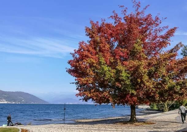 Colori d'autunno sul Lago Maggiore