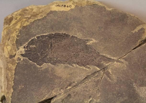 fossili museo besano