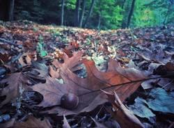 Foto d'autunno a Solbiate Arno