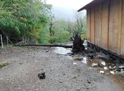 Maltempo, danni al Rifugio Animali Felici di Brissago Valtravaglia