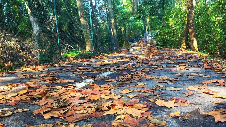 pista ciclabile d'autunno foto di Angela Garegnani
