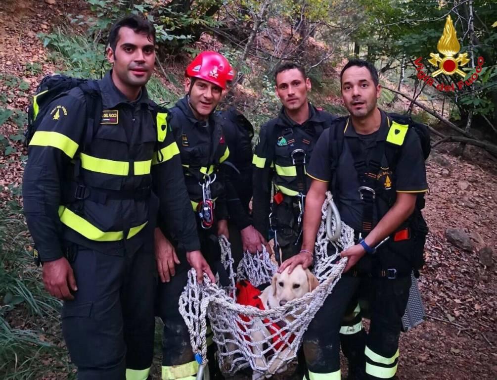 salvataggio cane vigili del fuoco induno olona