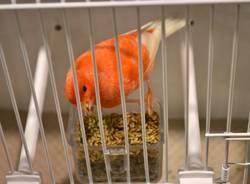Uccelli da tutto il mondo a MalpensaFiere