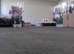 vendita fiori per autismo