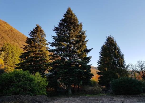 albero di natale roma vivaio spertini cittiglio