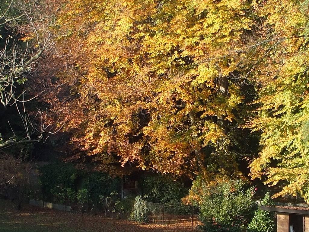 Scorcio d\'autunno.....