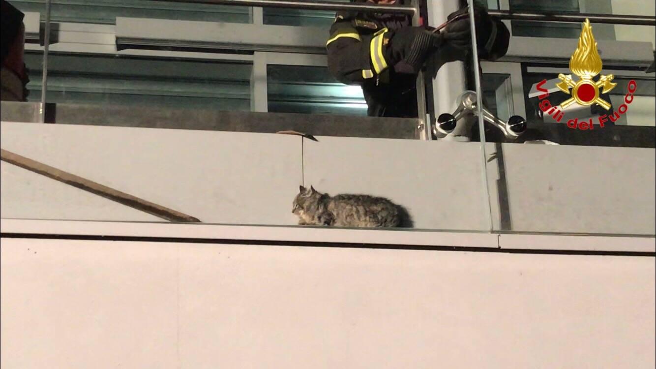 Il gatto incastrato salvato