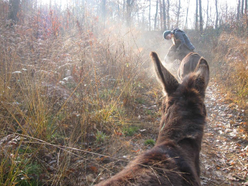 Il Raglio della Natura - Passeggiata con gli asini nel Parco Pineta