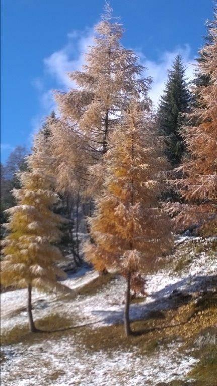 Autunno in  montagna..........
