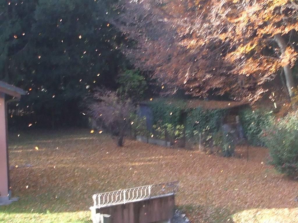 Pioggia .....di giallo