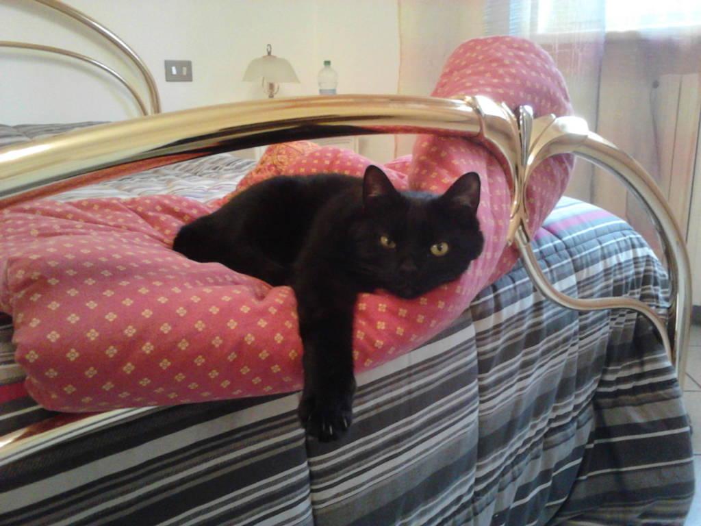 Per la giornata dei gatti neri