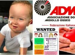donatori di midollo admo